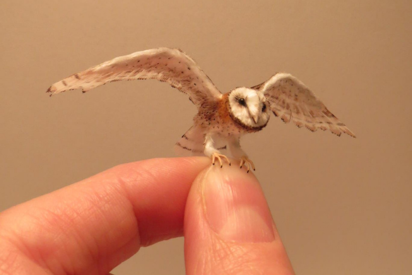 tiny Barn Owl