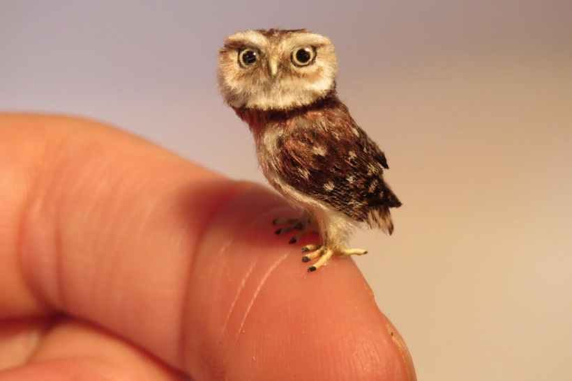 tiny Little Owl