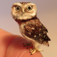 Amazing miniature owls