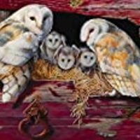 Cobble Hill Barn Owls 1000 Piece Jigsaw Puzzle