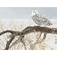 Cobble Hill Fallen Willow Snowy Owl 500 Piece Jigsaw Puzzle