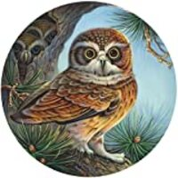 Bits and Pieces - 500 Piece Round Jigsaw Puzzle for Adults - Owl and Chicks - 500 pc Owl and Owlets in a Pine Tree Round Jigsaw by Artist Oleg Gavrilov