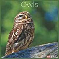 Owls 2021 Calendar: Official Owls Wall Calendar 2021, 18 Months